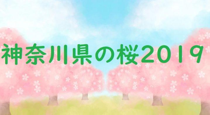 神奈川県の桜2019